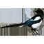 Сорока - разработка и продвижение сайтов